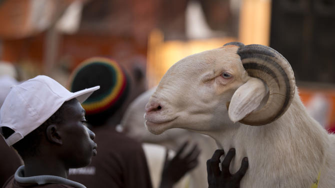 "In this Saturday, Oct. 6, 2012 photo, Dogo Ndiaye strokes ram Papis General as competitors await the judges' final decisions, in the Fann area regional final of the Khar Bii competition, in Dakar, Senegal. In a nation where sheep are given names and kept inside homes as companion animals, the most popular show on television is ""Khar Bii,"" or literally, ""This Sheep"" in the local Wolof language. It's an American Idol-style nationwide search for Senegal's most perfect specimen ahead of the Eid al-Adha festival, known locally as Tabaski. (AP Photo/Rebecca Blackwell)"