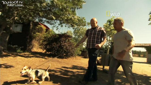'Leader of the Pack' Exclusive: Barking Problem