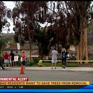 Carlsbad residents want to save trees from removal