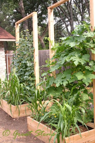 Maximize Vertical Potential with Trellises