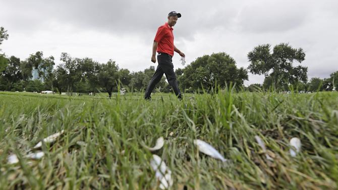 Cameron Percy walks by dead minnows on the 11th fairway during the second round of the Byron Nelson golf tournament, Friday, May 29, 2015, in Irving, Texas. Overnight storms flooded parts of the golf course delaying the start of play.(AP Photo/LM Otero)