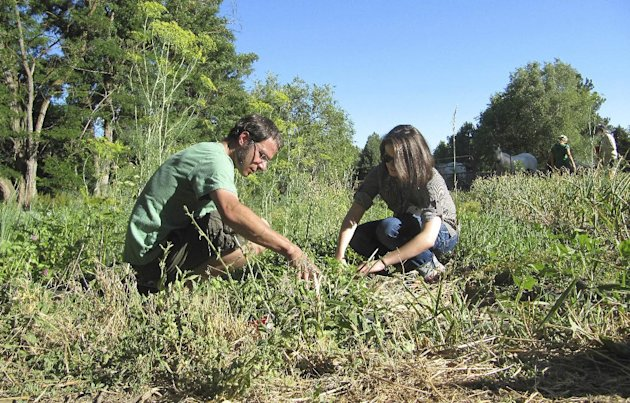 Davey Rodenstein, left, and Lindsay Reiber participate in a &quot;weed dating&quot; event at the Earthly Delights Farm in Boise, Idaho on Thursday, June 28, 2012. The farm is among a handful across the country offering this unconventional form of speed dating, where singles meet while working together in the fields. The payoff for their toil? A chance at romance. (AP Photo/Jessie L. Bonner)