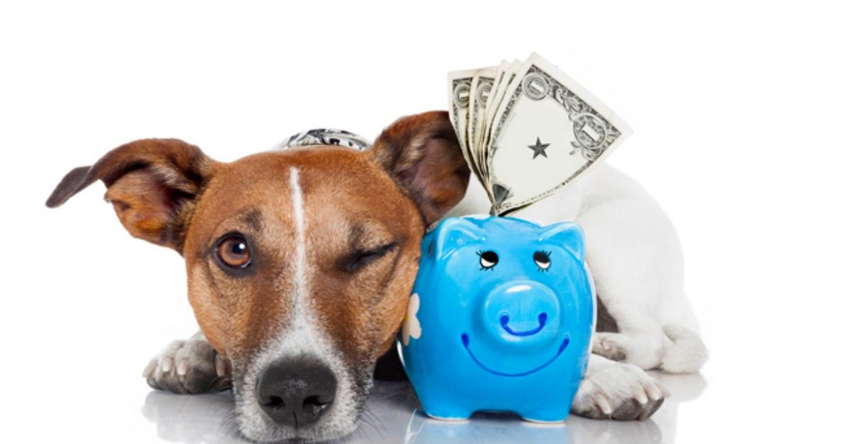 Don't Let Your Dogs Food Break The Bank