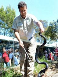 Dean Purcell, a reptile keeper at Sydney&#39;s Taronga Zoo, seen holding a venomous red-bellied black snake. The zoo holds exposure workshops for people with a crippling fear of snakes and reptile talks for school groups to dispel some of the most common myths about the misunderstood creatures