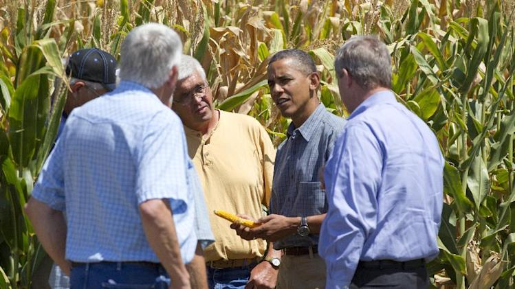 President Barack Obama and Agriculture Secretary Tom Vilsack, right, inspect drought damaged corn on the McIntosh farm with members of the McIntosh family, Monday, Aug. 13, 2012, in Missouri Valley, Iowa, during a three day campaign bus tour through Iowa. (AP Photo/Carolyn Kaster)
