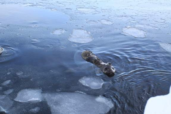 Seals helped scientists track cold, deep currents in Antarctica.