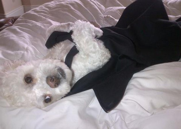 Victoria Beckham, dog dress