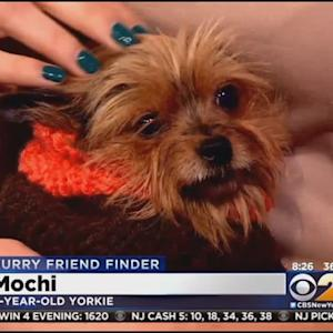 Furry Friend Finder: Mochi And Teuscher