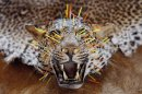 In this Tuesday, April 30, 2013 photo, a leopard with acupuncture-like needles on its face, to keep the skin tight, lies in Radomir Franz's taxidermy shop, in Sakvice, Czech Republic, Thursday, May 2, 2013. Franz is one of central Europe's most sought-after experts in the field _ and says he has stuffed animals from every country except, perhaps, Greenland. Franz, wearing safari-like clothing and a gold chain, says demand for his work never ceases, with orders from all over the world. He spends part of the year traveling to see animals in their natural habitat so that his work is as accurate as possible. (AP Photo/Petr David Josek)