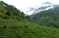 This file photo shows a general view of rice terraces in Bontoc, the Cordillera mountain region of the northern Phliippines, in 2005. Eleven people died and 10 others were injured when a bus fell into a ravine near Bontoc, police said on Monday