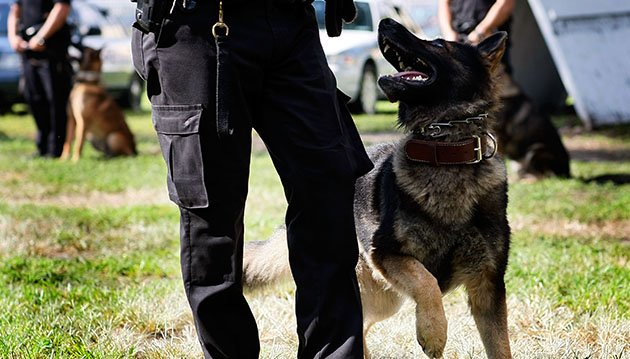 File photo of police dog graduating from Miami K-9 academy. (Joe Raedle/Getty)