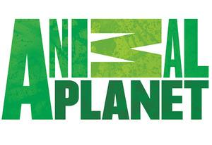 Animal Planet logo | Photo Credits: Animal Planet