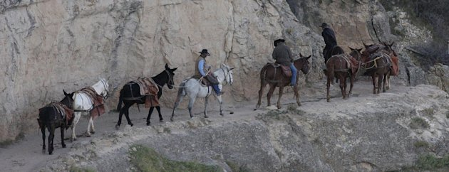 This Monday Oct. 22, 2012, photo shows a mule team walking along the Bright Angel Trail on the South Rim of the Grand Canyon National Park in Arizona. Search engine giant Google is using the Trekker, 