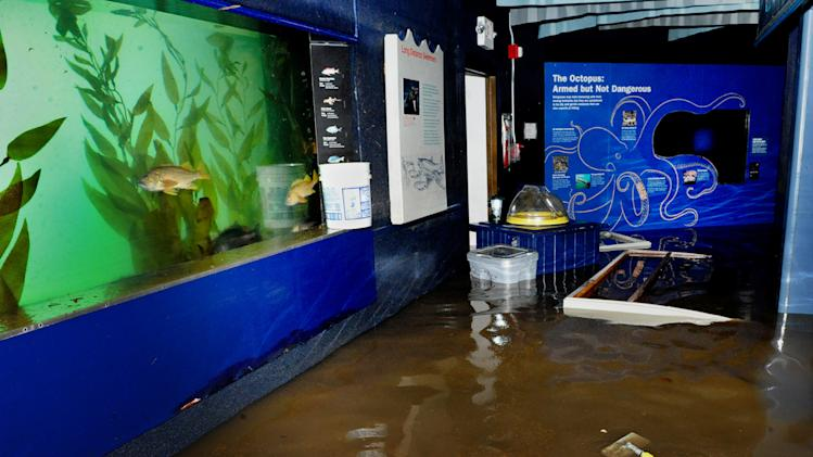 In this Nov. 1, 2012 photo provided by the Wildlife Conservation Society, fish swim in an exhibit at Coney Island's New York Aquarium in front of floodwaters that inundated the aquarium during Superstorm Sandy. Unless power is restored soon, the aquarium says it may have to relocate 12,000 creatures, including walruses, sharks, sea turtles, penguins and a giant octopus. (AP Photo/Wildlife Conservation Society, Julie Larsen Maher)