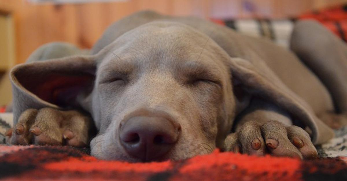 5 Reasons You Should Sleep With Your Dog