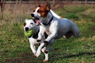 Dogs need frequent outdoor exercise. Pet parks offer such options. Still, free play includes certain courtesy guidelines for dogs and their handlers. What etiquette expectations come into play at dog parks? Consider these 10 tips for dog park politeness.