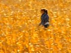 Woman appears to float above a cornfield