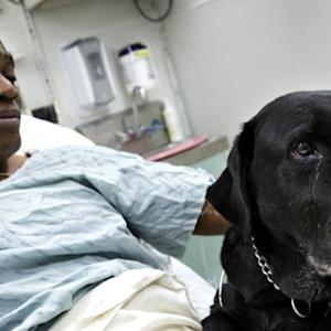 Hero guide dog to stay with blind man