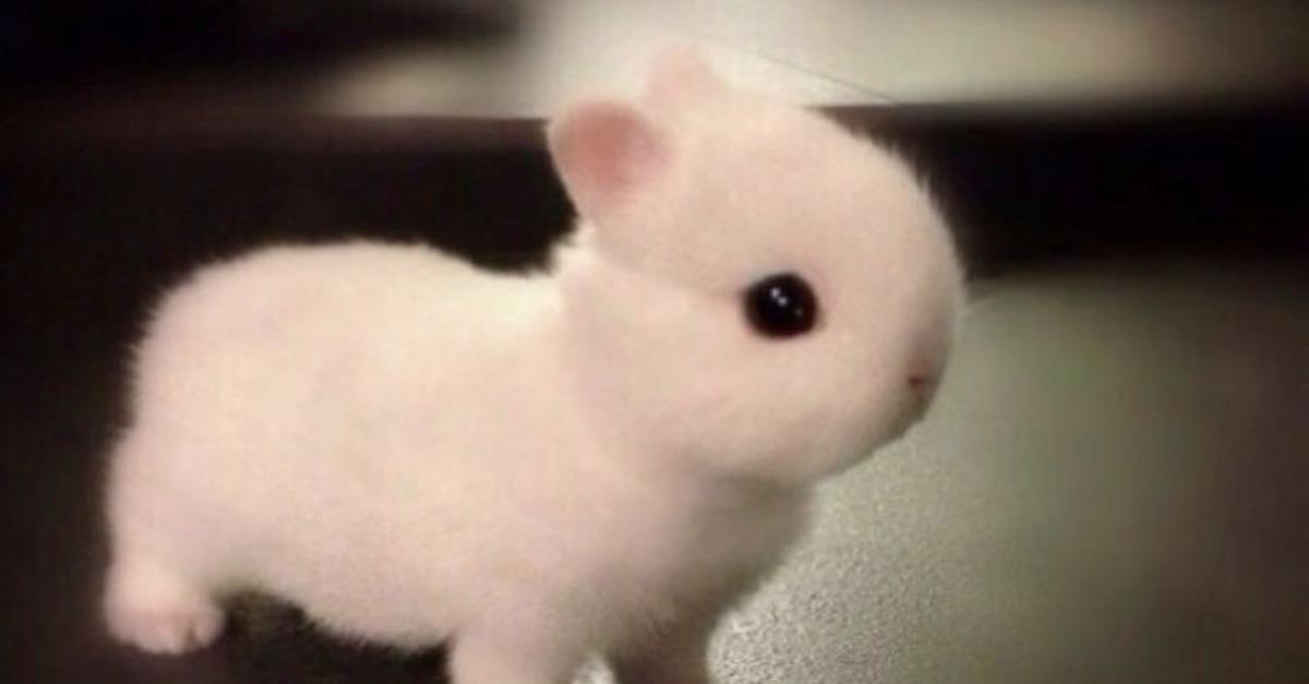 35 Baby Animals With Massive Amounts Of Cute