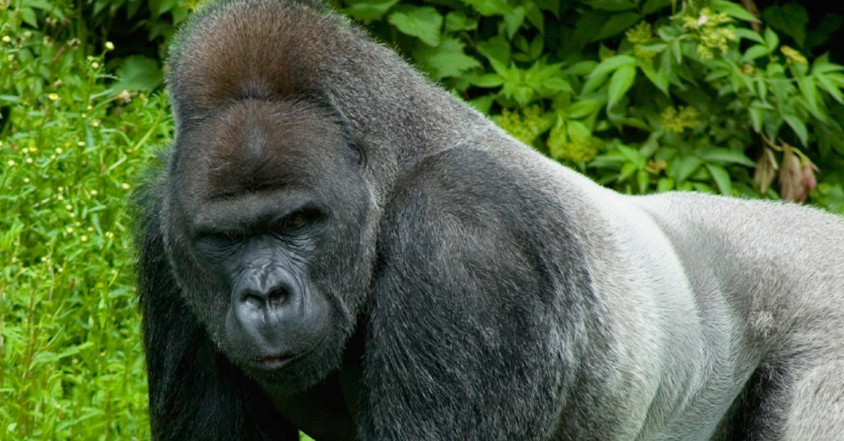 Avoid These Animals In Gabon!