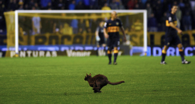 A cat runs on the field during the Argentine First Division soccer match between Boca Juniors and Estudiantes de La Plata in Buenos Aires