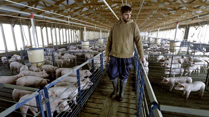 In this photo taken Nov. 11. 2015, production manager Ryan Feeley checks on a barn full of young pigs at Seabord Foods' Ladder Creek hog feeding operation near Tribune, Kan. The operation is the nation's second largest confined hog feeding farm and the company is set to build another site nearby if granted a permit by the state. Recognizing that economic development was at a standstill, county residents narrowly voted five years ago to allow corporate hog-feeding operations to move in and bolster the tax base in the county. (AP Photo/Charlie Riedel)