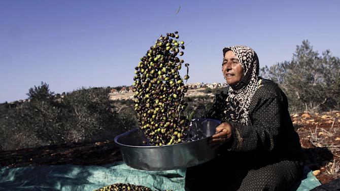 A Palestinian woman sorts olives close to a Jewish settlement of Shakid, outside the West Bank city of Jenin, Saturday, Nov. 3, 2012. (AP Photo/Mohammed Ballas)