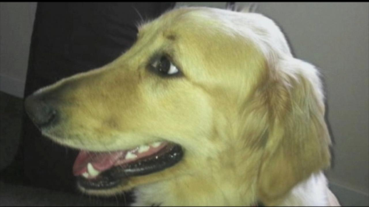 Dog Dies After Being Left in Petco Dryer, Owner Says