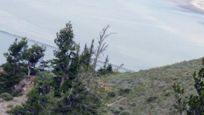 "This July 15, 2012, image provided by Coty Creighton shows the ""goat man,"" in white at center, right, near Ogden, Utah. This man spotted dressed in a goat suit among a herd of wild goats in the mountains of northern Utah has wildlife officials worried he could be in danger as hunting season approaches. Phil Douglass of the Utah Division of Wildlife Resources said Friday July 20, 2012, the person is doing nothing illegal, but he worries the so-called ""goat man"" is unaware of the dangers. (AP Photo/Coty Creighton)"