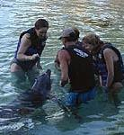 Dolphin Quest Hawaii