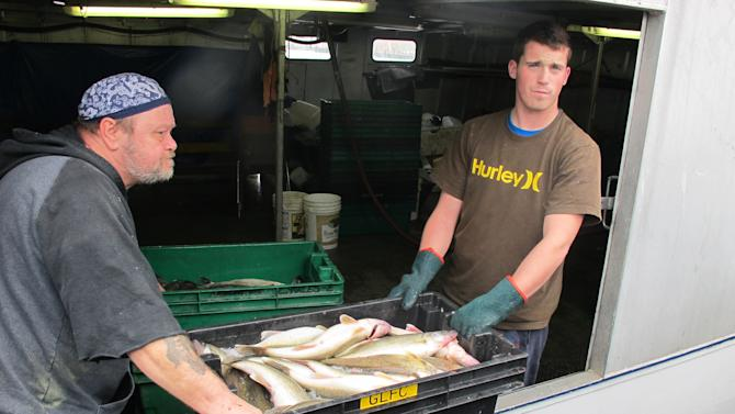 In this photo taken Nov. 10, 2010, Ken Corlett, left, and Josh Mummery prepare to unload a tray of Lake Erie fish from inside the tug J.R. Elsley at the dock in Kingsville, Ontario. Local fishermen are already squeezed by the economy and catch regulations, and they fear Asian carp could devastate their livelihood.  (AP Photo/John Flesher)