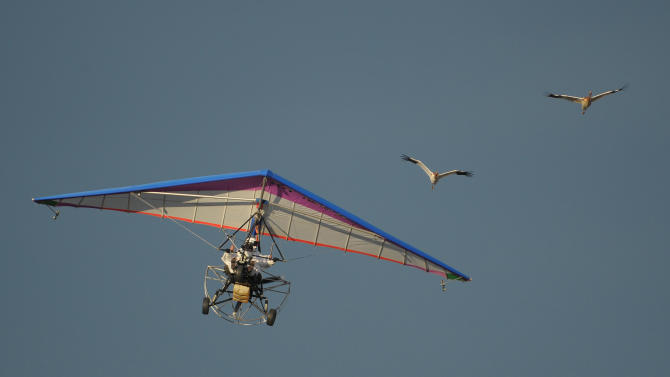 Russian President Vladimir Putin flies in a motorized hang glider alongside two Siberian white cranes, on the Yamal Peninsula, in Russia Wednesday Sept. 5, 2012. Putin took part in a flight as part of a program devised by environmentalists to lead the endangered cranes, which were raised in captivity, on their migration to Asia. (AP Photo/RIA-Novosti, Alexei Druzhinin, Presidential Press Service)
