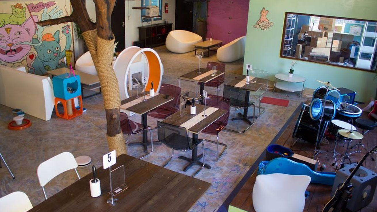 The Early Word on Texas' First Cat Cafe