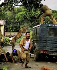 In this photo taken Tuesday, July 19, 2011, a leopard attacks a forest guard as another runs for cover at Prakash Nagar village near Salugara, on the outskirts of Siliguri, India. The leopard strayed into the village area and attacked several villagers, including at least four guards, before being caught by forest officials, according to news reports. The leopard, which suffered injuries caused by knives and batons, died later in the evening at a veterinary center. (AP Photo) INDIA OUT