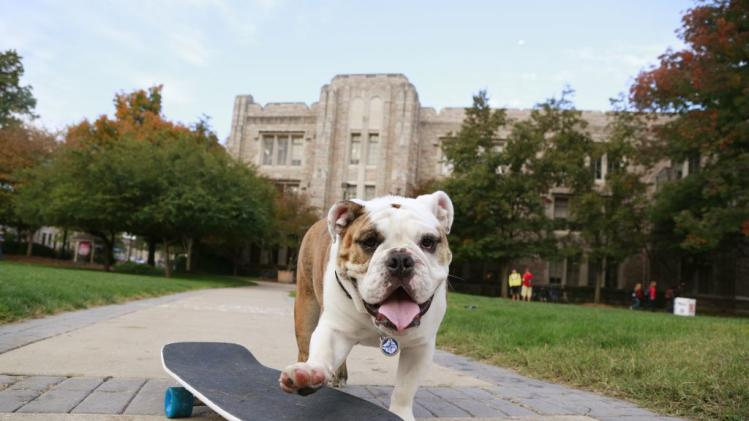 Meet the Adorable Bulldogs That Rule College Sports Social Media