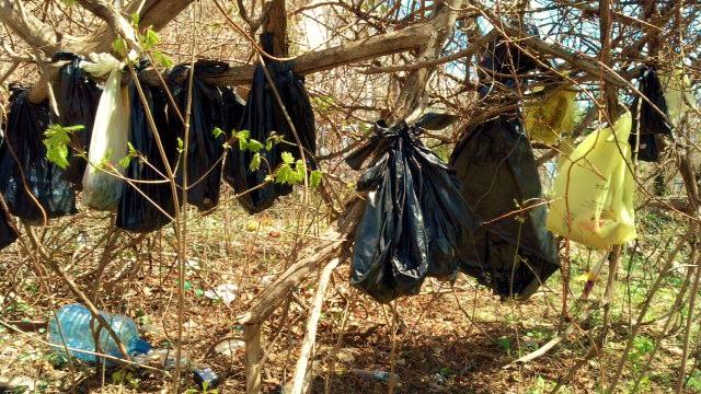 In this April 24, 2014 photo provided by the SPCA of Westchester's Humane Law Enforcement Division, plastic bags containing the remains of about 25 cats are hanging from a tree in a wooded area in Yonkers, N.Y. Authorities say it is too early to tell whether someone had killed the cats or were just disposing of their bodies. (AP Photo/SPCA of Westchester's Humane Law Enforcement Division)