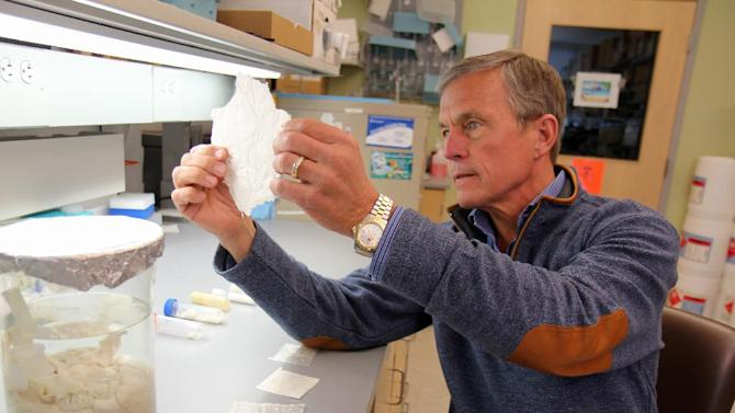 """This undated handout photo provided by the University of Pittsburgh Medical Center shows Dr. Stephen Badylak, a surgery professor at the university, and deputy director of the McGowan Institute for Regenerative Medicine, holding a sheet of """"extracellular matrix,"""" scaffolding-like material derived from pig bladder. His team implanted a similar version, designed for use in humans, into a handful of men with severe leg injuries and reported Wednesday that the experimental treatment helped regrow muscle. (AP Photo/University of Pittsburgh Medical Center."""