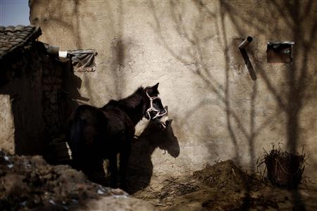 A donkey is seen outside a house in Yuangudui village, Gansu Province