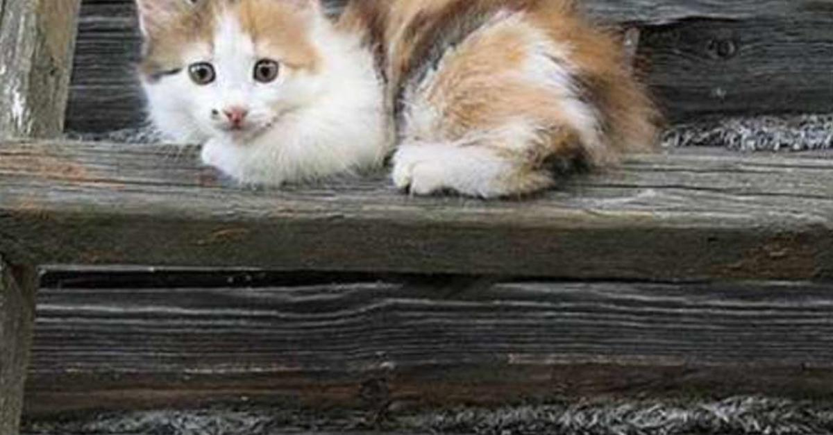 The 29 Most Adorable Family Photos ... of Cats