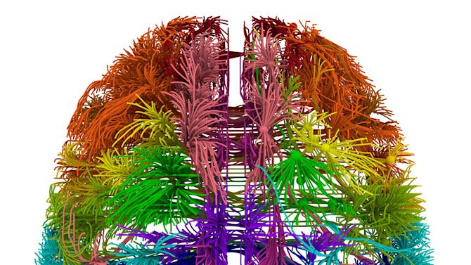 This image provided by the Allen Institute for Brain Science on March 28, 2014 shows a top-down view of connections originating from different cortical areas of the mouse brain. The research published Wednesday, April 2, 2014 is the first brain-wide wiring diagram for a mammal at such a level of detail. While it does not reveal every connection between each of the rodent's 75 million brain cells, it shows how parts of the brain are connected. (AP Photo/Allen Institute for Brain Science)