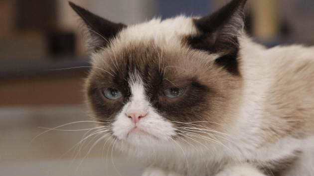 Grumpy Cat appears on 'Good Morning America,' on March 22, 2103 -- Getty Images