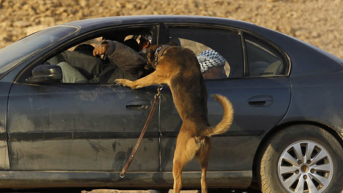 A military dog attacks a simulated opponent in a car during a combat skills demonstration by graduating soldiers from the Saudi special forces at a base near Riyadh