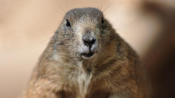 Climate Change Is Putting Punxsutawney Phil Out of a Job