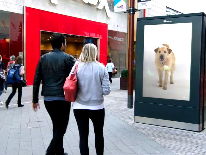 Dog follows shoppers around on digital billboards, looking for a new home