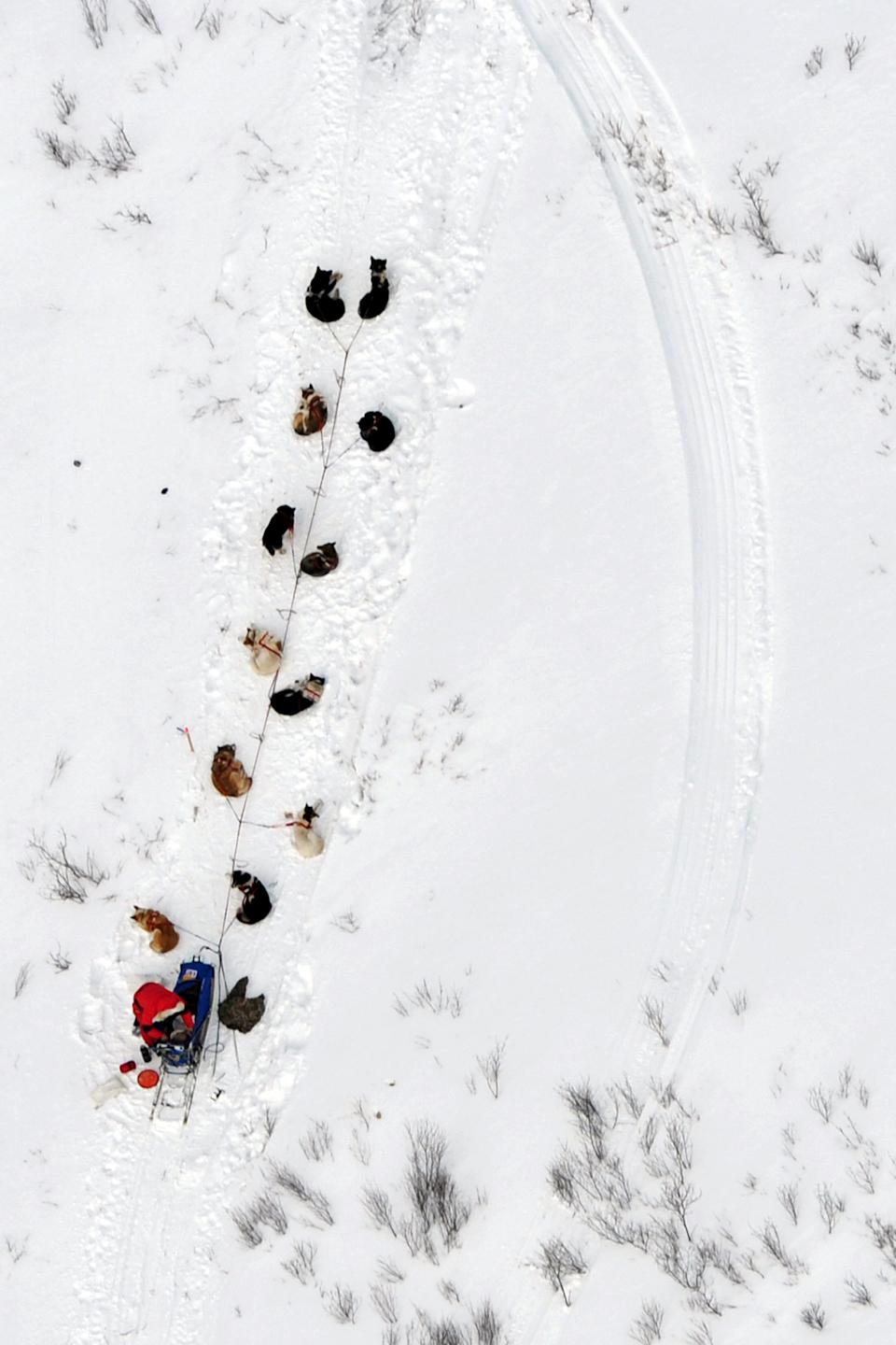 A musher and dog team rest between the Rohn and Nikolai checkpoints in Alaska during the Iditarod Trail Sled Dog Race on Tuesday, March 5, 2013. (AP Photo/The Anchorage Daily News, Bill Roth)