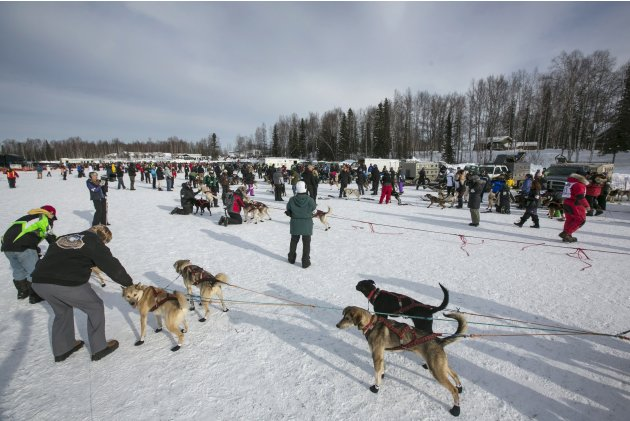 Dog teams are lined up for the start gate at the re-start of the Iditarod dog sled race in Willow
