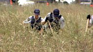 Police use rakes while conducting a grid search in a field in Richmond, B.C., while looking for missing Lianjie Guo, of China.