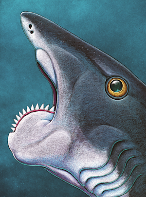Toothy Spiral Jaw Gave Ancient Sea Predator an Edge