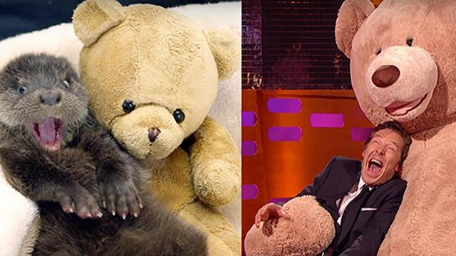 Benedict Cumberbatch Adorably Impersonates an Otter -- Watch the Vid!