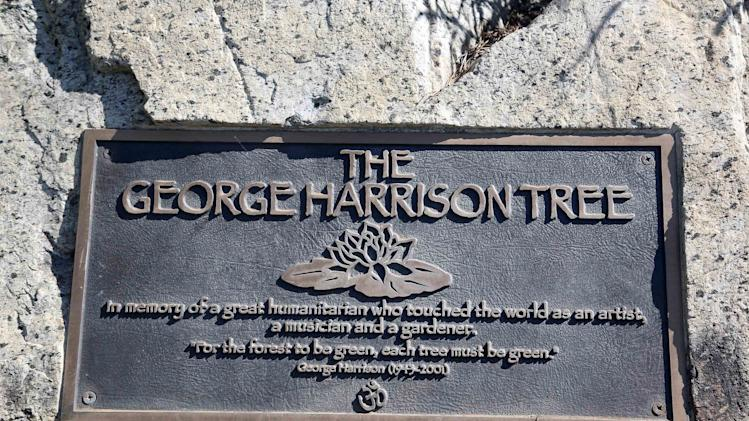 A plaque marks the place where a tree was planted in Los Angeles to honor former Beatle George Harrison in Griffith Park on Tuesday, July 22, 2014. The tree planted in Los Angeles to honor former Beatle George Harrison has been killed by beetles. The pine grew to more than 12 feet tall before succumbing to a bark beetle infestation and removed last month. (AP Photo)